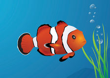 Vector clown fish. Vector image of a underwater clown fish Stock Photo