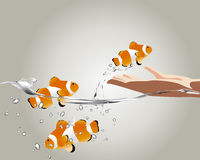 Clown fish jumping Stock Photography