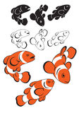 Clown fish. Not figure shows clown fish Royalty Free Stock Image