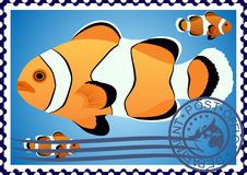 Clown Fish. Postage stamp Stock Images