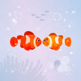 Clown fish on the reef Royalty Free Stock Photos