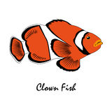 Clown-Fish Saltwater Aquarium-Fischillustration Stockfoto