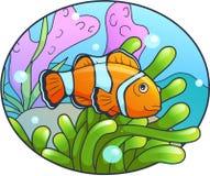 Clown fish swims in the sea. Cute clown fish swims in the sea Royalty Free Stock Image