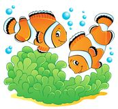 Clown fish theme image 1. Vector illustration Stock Images