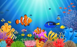 Clown fish under the sea. Illustration Royalty Free Stock Photography