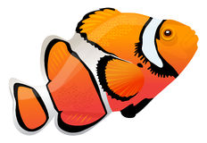 Clown fish. Vector illustration of a clown fish Stock Photos