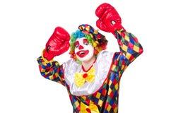 Clown med boxninghandskar Arkivbilder