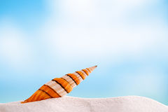 Clown overzeese shell met oceaan, strand en zeegezicht Royalty-vrije Stock Fotografie