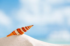 Clown sea shell with ocean , beach and seascape Stock Photo
