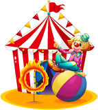 A clown sitting  above a ball beside a ring of fire in front of. Illustration of a clown sitting  above a ball beside a ring of fire in front of a circus tent on Royalty Free Stock Photo