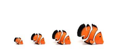 Clownfische Stockfotos