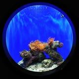 clownfish δεξαμενή Στοκ φωτογραφία με δικαίωμα ελεύθερης χρήσης