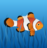 Clownfish Photographie stock