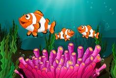 Clownfish 皇族释放例证