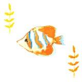 Clownfish Illustration Stock