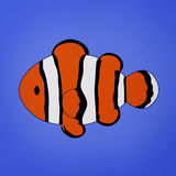 Clownfish, Amphiprion Stock Photography
