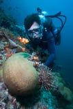 Clownfish. royalty free stock photo