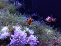 Aquarium sea bottom clownfish 极地海洋馆 stock images