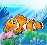 Clownfish com anemone Imagem de Stock