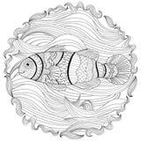 Clownfish com detalhes altos Imagem de Stock