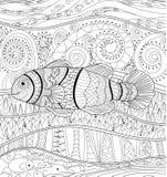Clownfish com detalhes altos Foto de Stock Royalty Free