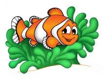 Clownfish en la anémona 3 Fotografía de archivo libre de regalías