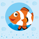 Clownfish with happy face. Illustration Stock Photography