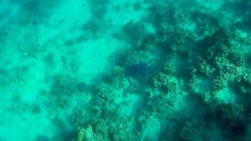 Clownfish hermoso y otros pescados tropicales en un arrecife de coral almacen de metraje de vídeo