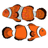 Clownfish with high details. Royalty Free Stock Photos