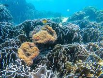 Clownfish i anemonowa kępa przy głaz wyspą obraz royalty free