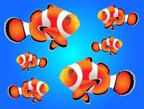 Clownfish med blå bakgrund Royaltyfri Foto