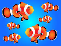 Clownfish met blauwe achtergrond Royalty-vrije Stock Foto
