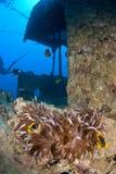Clownfish op schipwrak Stock Afbeeldingen
