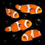 Clownfish oranges sur le fond foncé avec des bulles photographie stock libre de droits