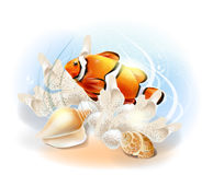 Clownfish in the sea. Royalty Free Stock Images
