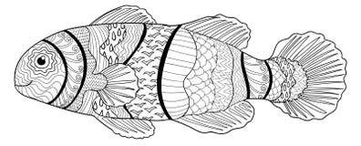 Clownfish z wysokimi szczegółami Obrazy Stock