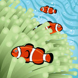 Clownfishes heureux Photographie stock