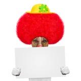 Clownhund mit roter Perücke und Hut stockfotos