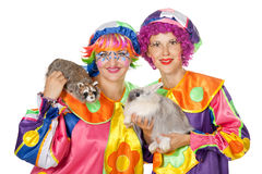 Clowns wiht rabbit and raccoon Stock Photography