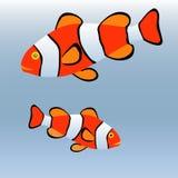 Clownvissen of anemoonvissen Stock Afbeeldingen