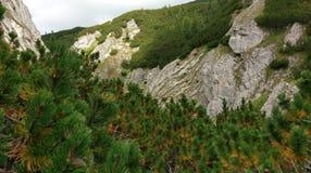 Clés de Horoabei, montagnes de Bucegi Image stock
