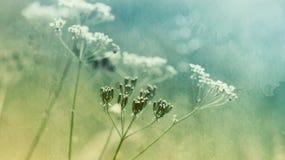Wiesen-Blumen Lizenzfreie Stockfotos
