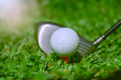 Club di golf e sfera in erba Il club di golf con palla da golf Immagine Stock Libera da Diritti