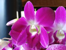Club med flowers. Lilly flower , orchid , flowers stock images