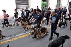 Clube dos cães Imagem de Stock