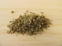 clubmoss herba lycopodii Στοκ Φωτογραφία
