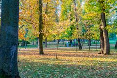 Cluj-Napoca Central Park όμορφο ηλιόλουστο ημερησίως φθινοπώρου στη Ρουμανία στοκ εικόνες