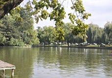 Cluj-Napoca RO, 24 September: Central Parkmeer in cluj-Napoca van het gebied van Transsylvanië in Roemenië Royalty-vrije Stock Foto's