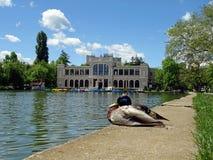Cluj Transylvania, Romania Obrazy Royalty Free