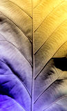 célula de la botánica del vintage seco de la hoja Foto de archivo libre de regalías